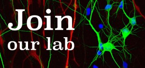 join our lab
